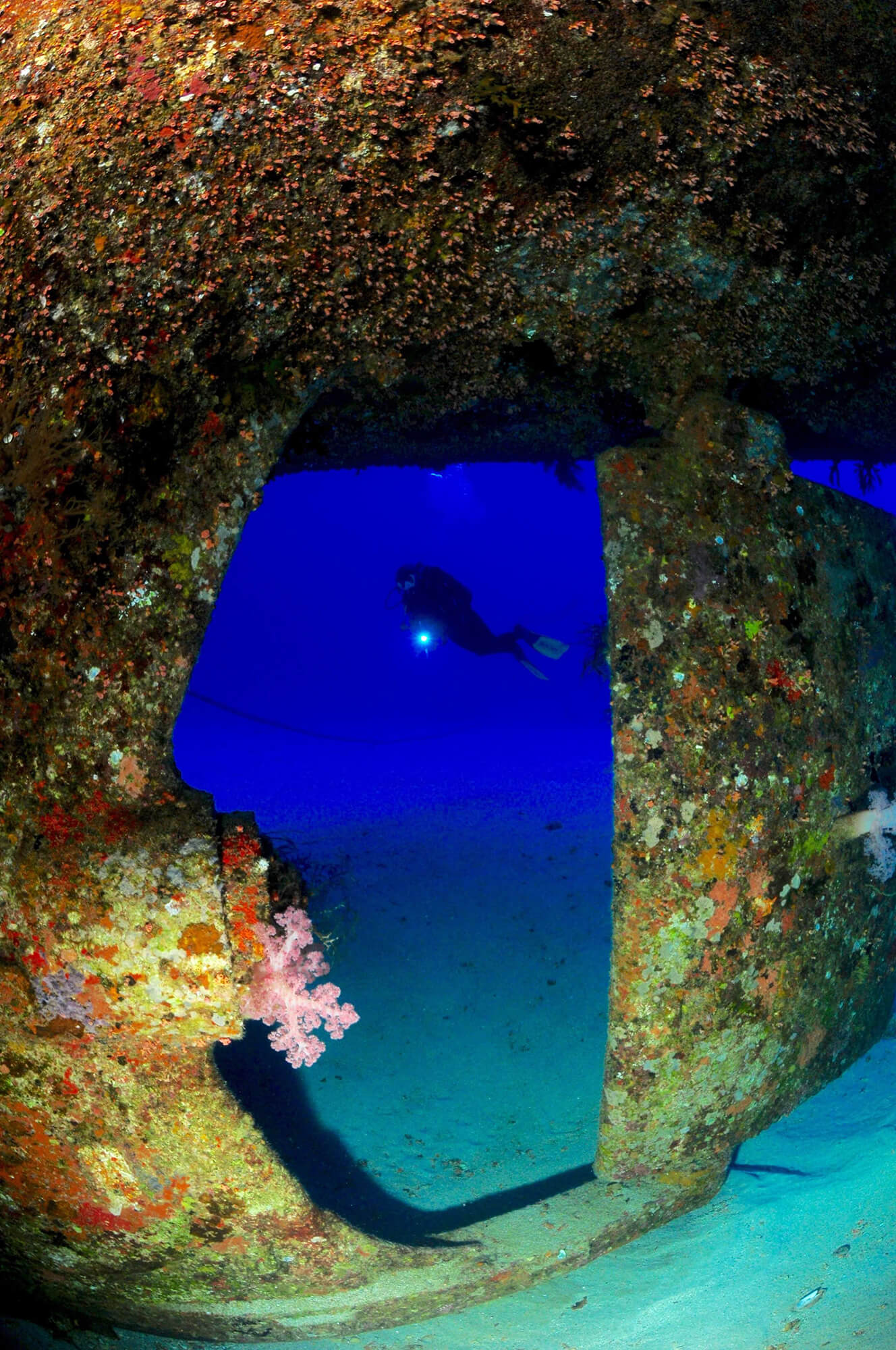 PADI Rescue Diver & EFR